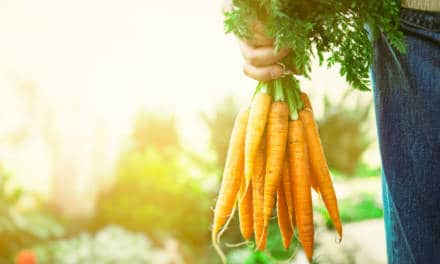 Organic Farms to visit in the UAE