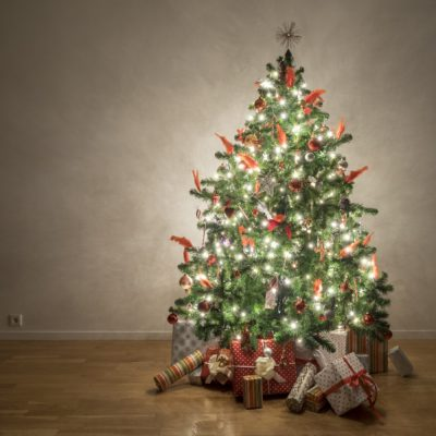 WIN ONE OF  TWO BEAUTIFUL CANADIAN FRASER FIR CHRISTMAS TREES