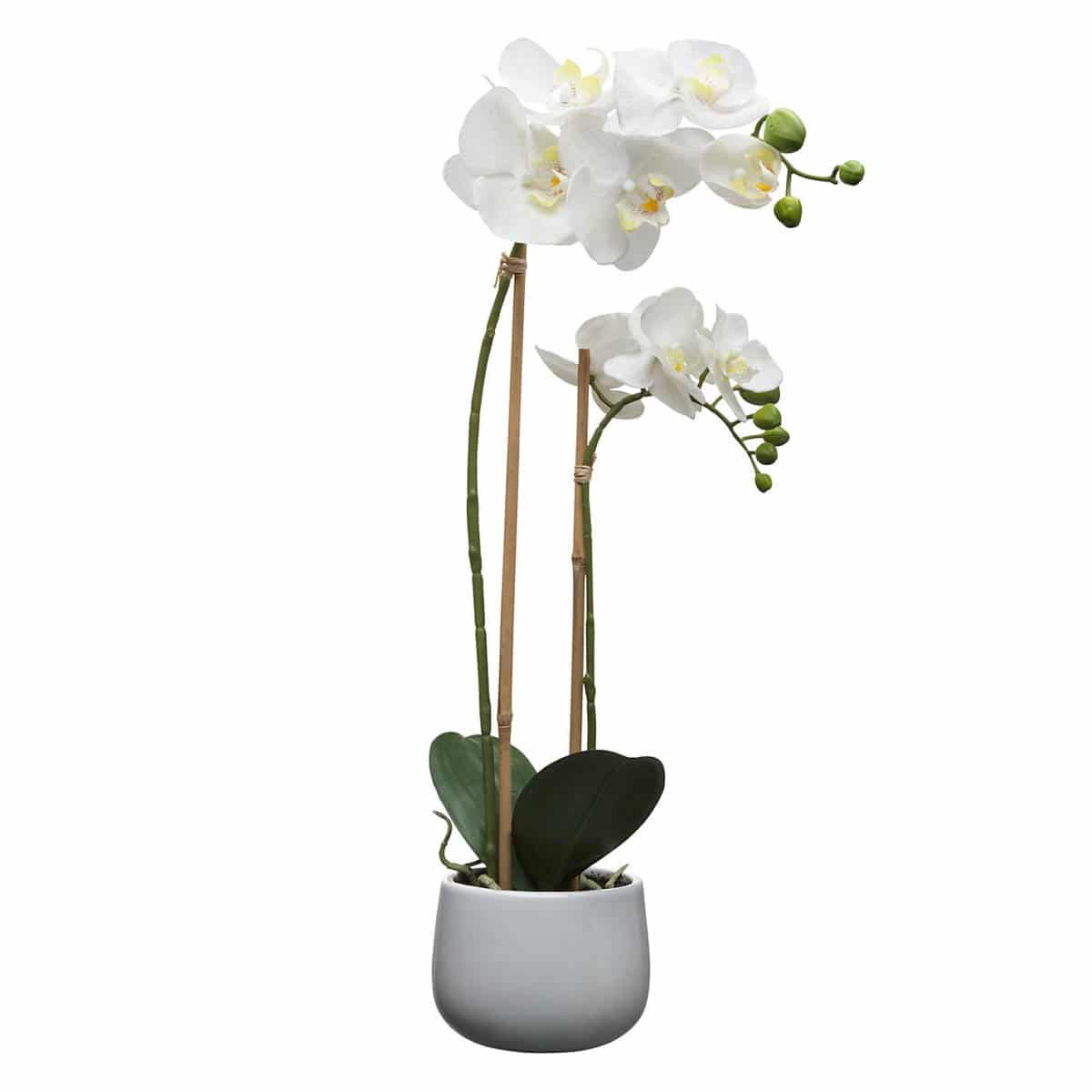 House By John Lewis Artificial Orchid White Large British Mums