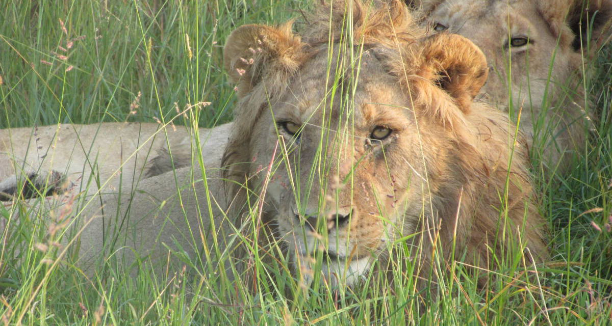 PLANNING A SHORT SAFARI IN KENYA