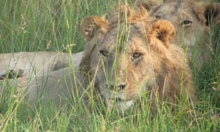 PLANNING A SHORT SAFARI IN KENYA