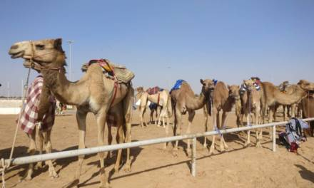 A Guide To Watching Camel Racing in Dubai By British Mum Nisha Childs