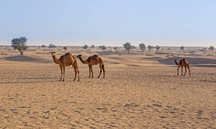 Where to make the most of the UAE Desert