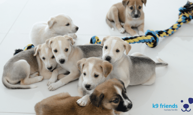 THESE GORGEOUS DOGS NEED A FOREVER HOME